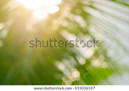 Blur nature tropical palm leaf with bokeh sun light abstract background.Retro color style.