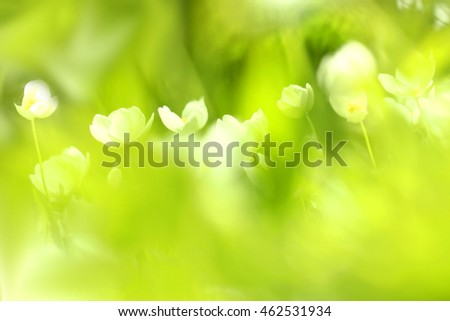 Blur of close up fresh green abstract from grass, white flowers and sunlight. Image for create nature background concept.