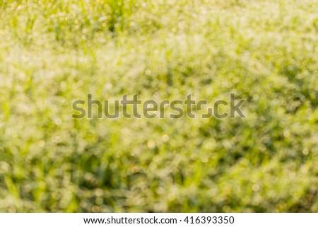 Blur of Fresh grass with dew drops and bokeh lights. Spring or summer background - stock photo