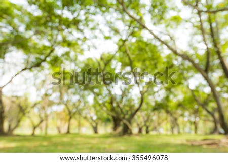 Blur of green natural tree in park background. - stock photo