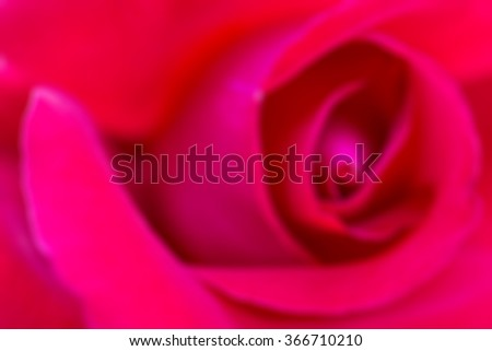 blur of the close-up of the rose - stock photo