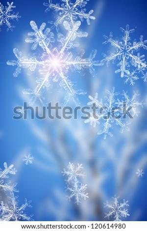 blur of winter tree - stock photo