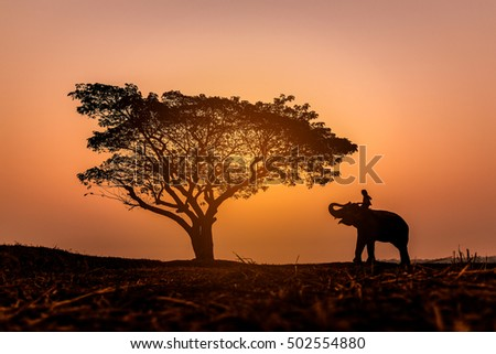 Blur silhouette picture of a mahout on his elephant near a big tree. That showing on  background sky during sunset.