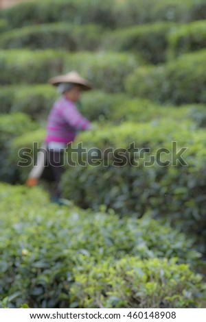 Blur style picture of Harvesters working in tea field
