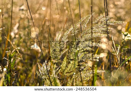 blur summer time morning dewy grass background - stock photo