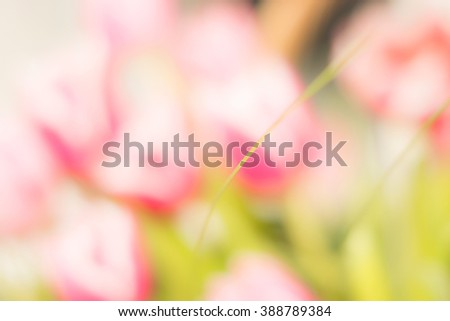 Blured photo of young bush branches and pink flowers in sun shine garden outdoors. Fresh bright pink tulips Bright spring image for gift cards  - stock photo