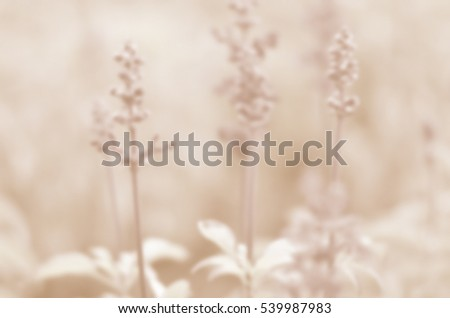 Blurred abstract background of Purple flowers