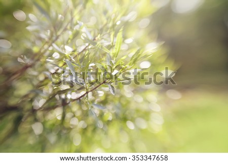 Blurred abstract background with bokeh with branches of willow.  Photo taken with Lensbaby - stock photo