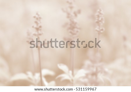 Blurred abstract light background of Purple flowers