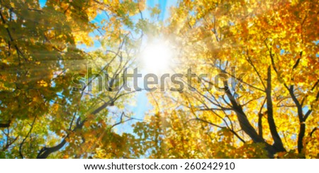 Blurred autumn sun at sunset under a tree - stock photo