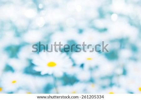 Blurred background field of daisies. - stock photo