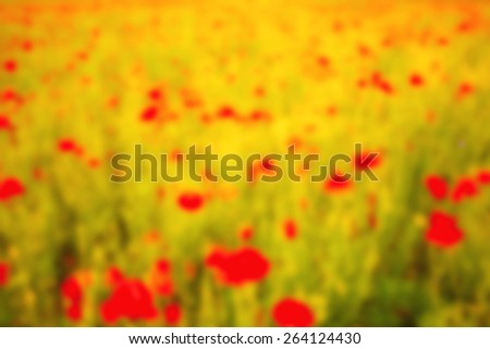 Blurred background. Flowering poppy field. Bright colored wallpaper. Red, yellow, green - the basic color of the blurred photos. Field, forest, flowers, sun, light in the form of diffuse spots. - stock photo