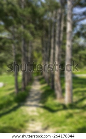 Blurred background narrow path among tall pine trees in the spring park. Around luscious spring green grass. The long shadows of the trees on the ground, falling from sunlight. - stock photo