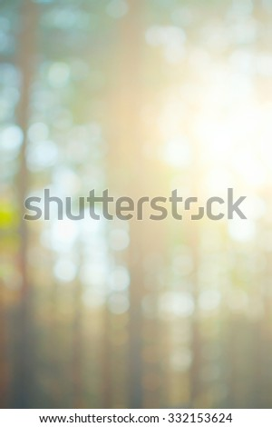 blurred background of a forest in summer at sunrise - stock photo