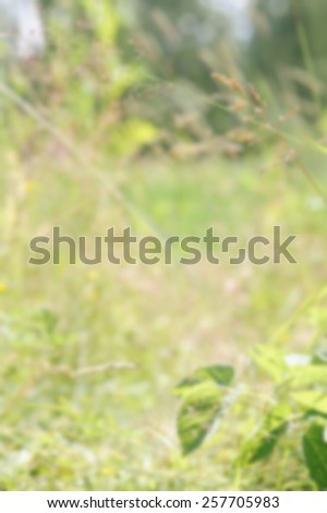 Blurred background of long grass. Suitable as background for most color texts including white. Artistic intent with filters and desaturation.