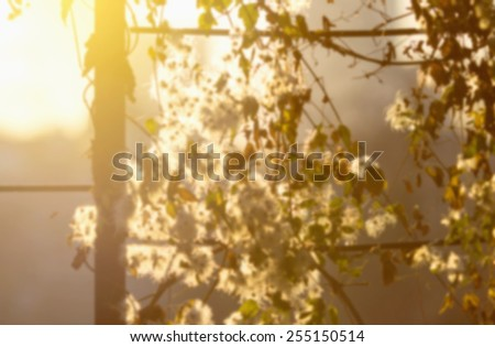 Blurred background of nature. Nature Bokeh. Concept - blurred kind of nature in the rays of sun light. Image for use in the background to illustrate the kinds of texts. Awakening of nature spring. - stock photo