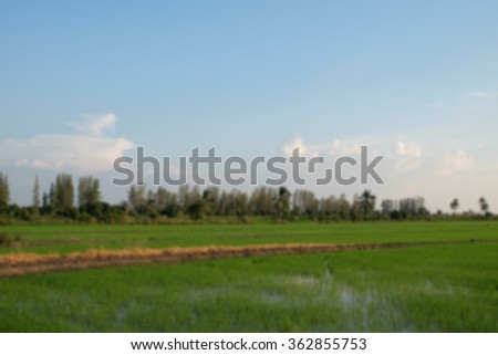 blurred background of rice field