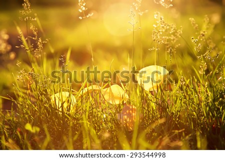 blurred background. yellow fallen leaves lie on the grass. autumn nature  - stock photo
