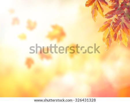 Blurred beautiful autumn background. - stock photo