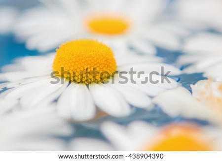 Blurred bright floral background of daisies or chrysanthemums closeup in blue water. Selective focus. - stock photo