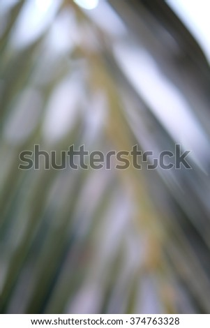 Blurred coconut leaves for background in green and white tone. - stock photo