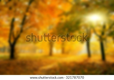 blurred colorful tree branches in sunny forest, abstract autumn natural background - stock photo