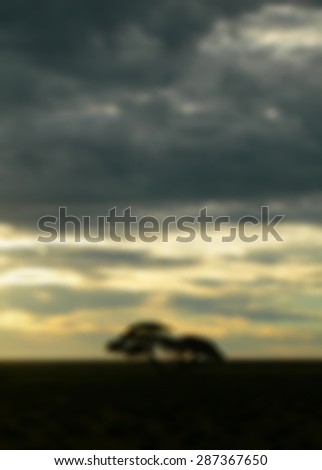 Blurred dusk on the African savanna with trees and cloudy sky, for travel backgrounds            - stock photo