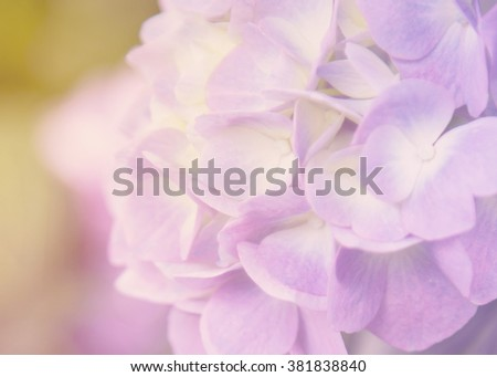 blurred floral background-spring, summer, wedding, love,