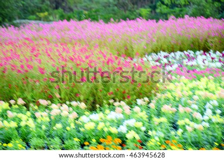 Blurred flowers field textures nature background