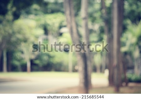 blurred forest  - stock photo