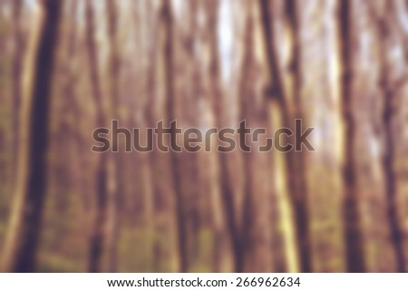 Blurred forest as abstract background of nature, tall trees reaching up high - stock photo