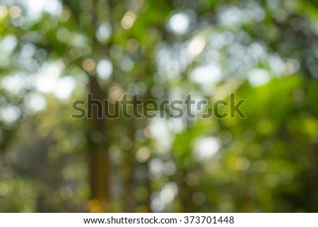Blurred forest background, natural bokeh - stock photo