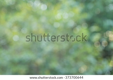 Blurred forest backgrounds, natural bokeh