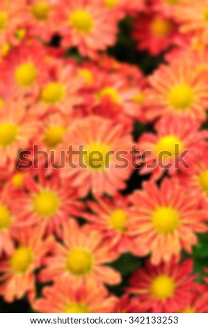 Blurred fresh flowers in the garden in Chiangmai of Thailand, Winter season