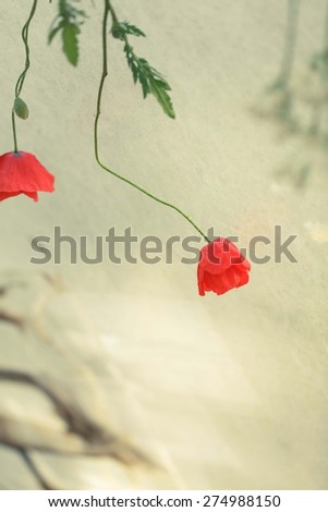 Blurred gentle background with poppy flower. - stock photo