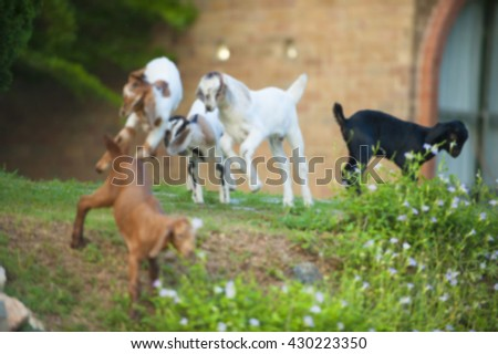 Blurred goat jumping natural background.