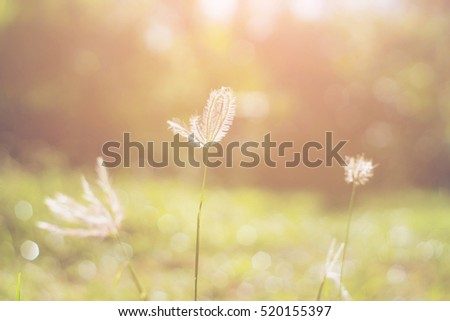 Blurred grass at sunrise