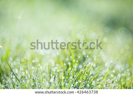 Blurred green background image with elements of round glowing bokeh. Nature background, green grass, dew, bokeh.