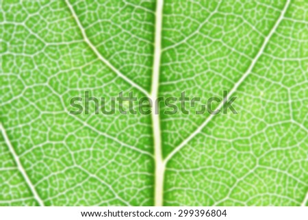 blurred green leaves in summer sunny day - stock photo