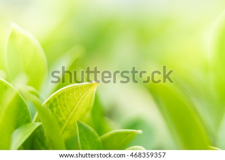 Blurred green nature with copy space using as background or wallpaper.