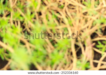 Blurred Green Plant