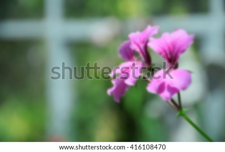 blurred image abstract beautiful pink flowers