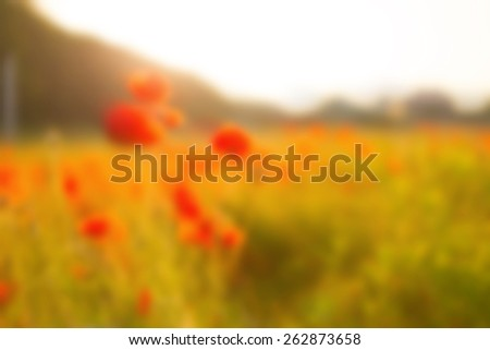 Blurred image background. Bright colored wallpaper. Red spot in the middle. Red, yellow, green - the basic color of the blurred photos. Field, forest, flowers, sun, light in the form of diffuse spots. - stock photo