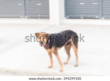 blurred image,dog - stock photo