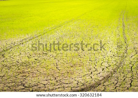 Blurred image for background of small sprout struggling for life on cracked earth - stock photo