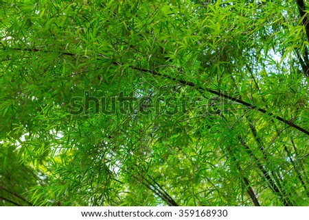 Blurred image of bamboo forest during afternoon time - stock photo