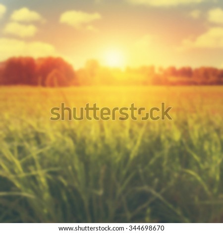 Blurred image of summer landscape at sunset.  - stock photo
