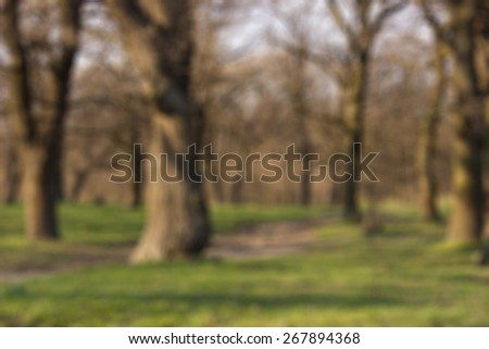 Blurred large deciduous trees without leaves in the woods in early spring. Beautiful sunset sunlight on the trunks of trees, the trail extends through the forest on the ground with a young lush grass. - stock photo