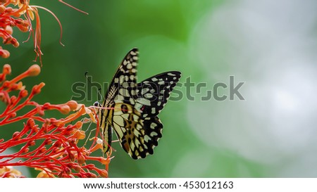 Blurred of Butterfly and Nature background.