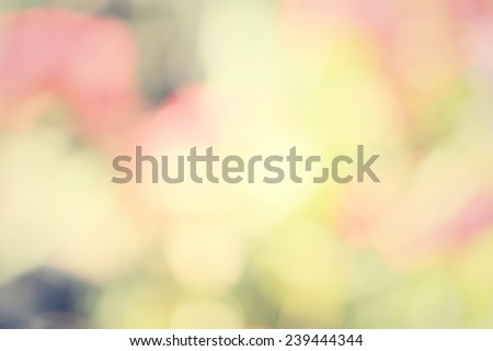 blurred of flowers - stock photo